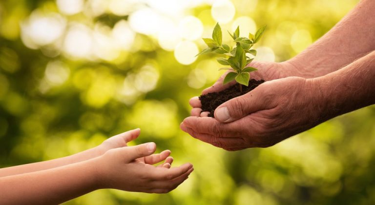 Adult hands holding a plant growing out of soil and handing it to child hands