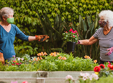 Two residents in the garden hand each other a plant